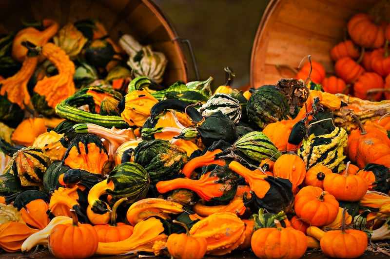 gourds-a-plenty